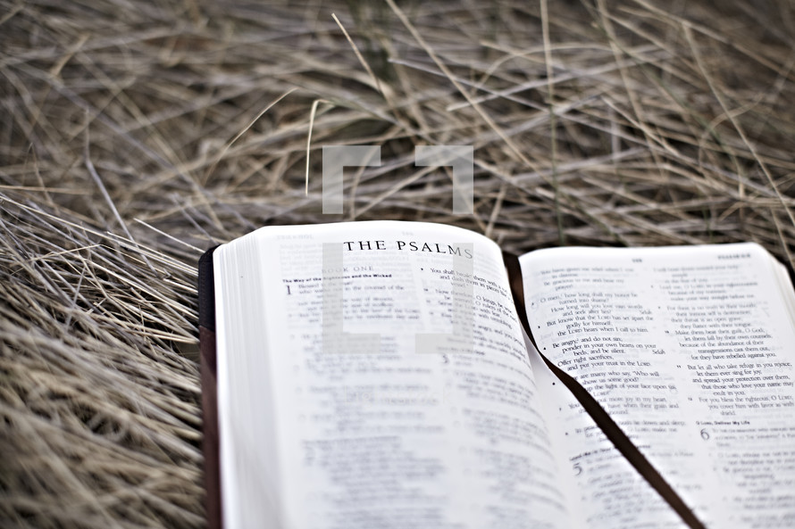 A bible lying on hay opened to the book of Psalms