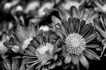 A group of daisies