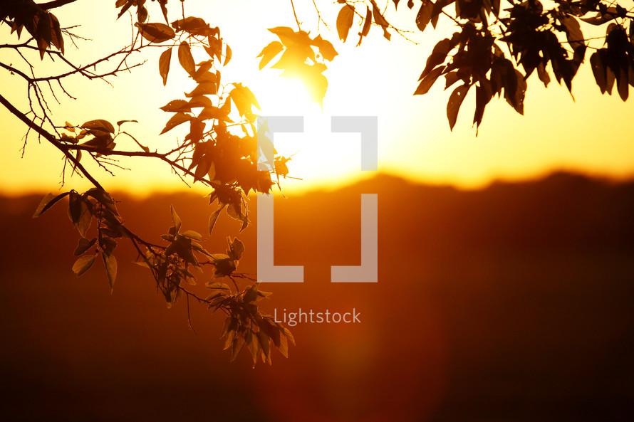 Golden bright sun light shining through leaves at sunrise or sunset in nature landscape