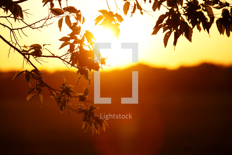 Golden bright sun light shining through leaves at sunrise or sunset in nature landscape