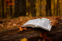 opened Bible on a fallen tree trunk