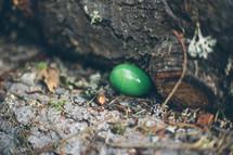 Easter egg on tree back.