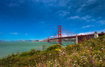 Golden Gate Bridge with field of flowers in the foreground and blue sky in the background.