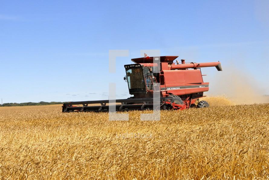 Combine harvester harvesting wheat. fall, season, seed, orange, red.