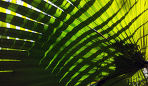 The Sun casts strong shadows on palm fronds in the deep  jungle where sunlight gives food to plants to help them grow.