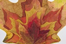Orange, red, and yellow Fall leaves