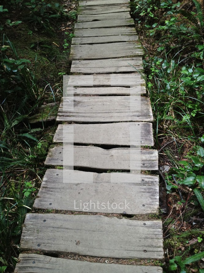 wood path through a forest