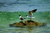 Seagulls on beach water rock