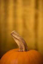stem of a pumpkin