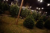 lights over a Christmas tree lot