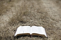 An open bible lying on a path