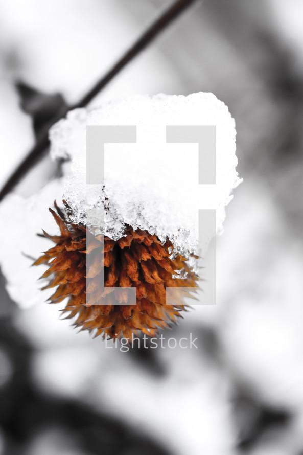 snow covered flower