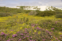 field of wild flowers with sand dunes