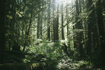 sunlight shining in a forest