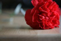Carnation flower on a butcher block table.