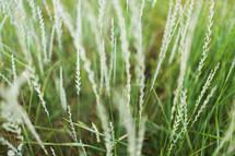 Stalks of grass.
