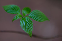 green leaves on a plant