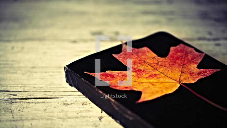A bright red, yellow and orange leaf laying on a Bible