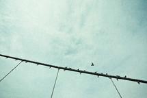 Birds on a pole.