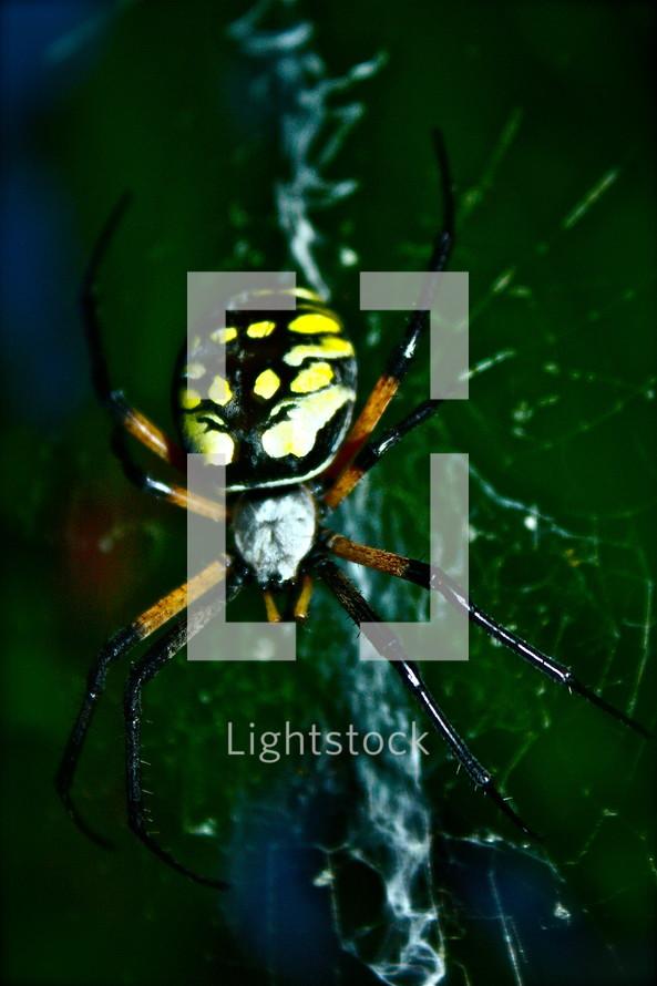 close up of spider
