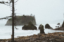 logs and driftwood washed onto a shore