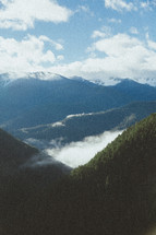 clouds over a mountain pine forest