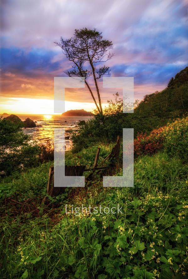 tree on a green shoreline in Trinidad beach