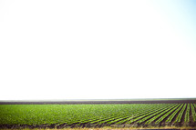 rows of crops on farmland