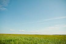 green coastal grass