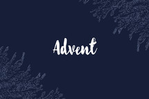 advent fir