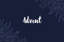 advent fir