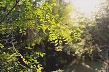 bright sunlight over green leaves
