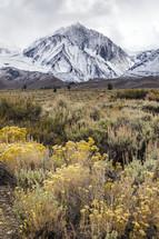 Mt Morrison & Sagebrush