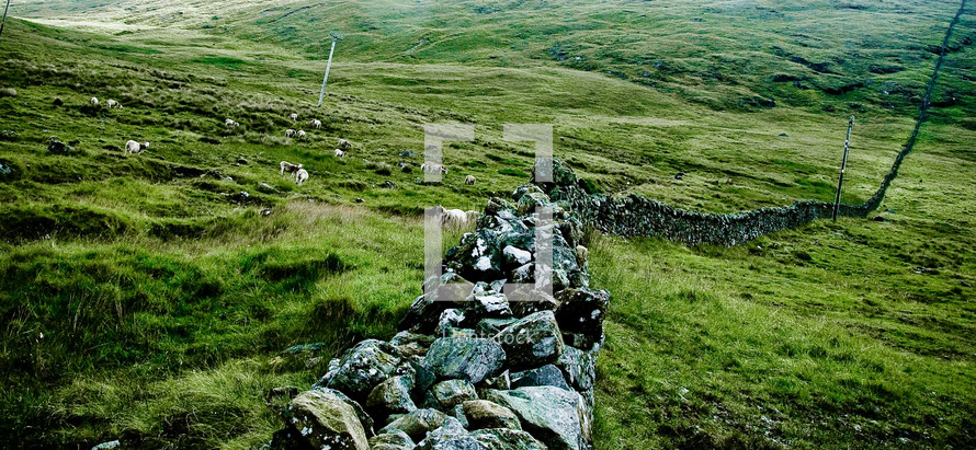 stone diving wall and sheep in a pasture