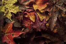 A pile of fallen Leaves (Red, Orange, Brown, and, Yellow)
