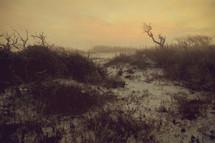 grassy dunes in Florida