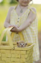 Girl holding basket with kitten