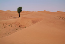 A lonely tree marks an oasis in the middle of the desert
