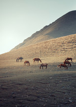 grazing horses on a mountainside