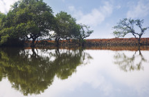 trees in a pond