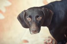 eyes of a dog