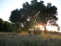 The tree of life - a tree with rays of sunlight penetrating its branches that gives hope, joy and light to all who see it.