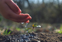 Young farmer watering a young plant growing in garden with sunlight. Earth day concept