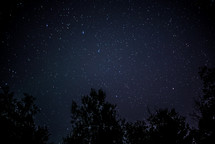 stars in the night sky above the trees