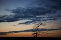 Solitary dormant tree at dusk.