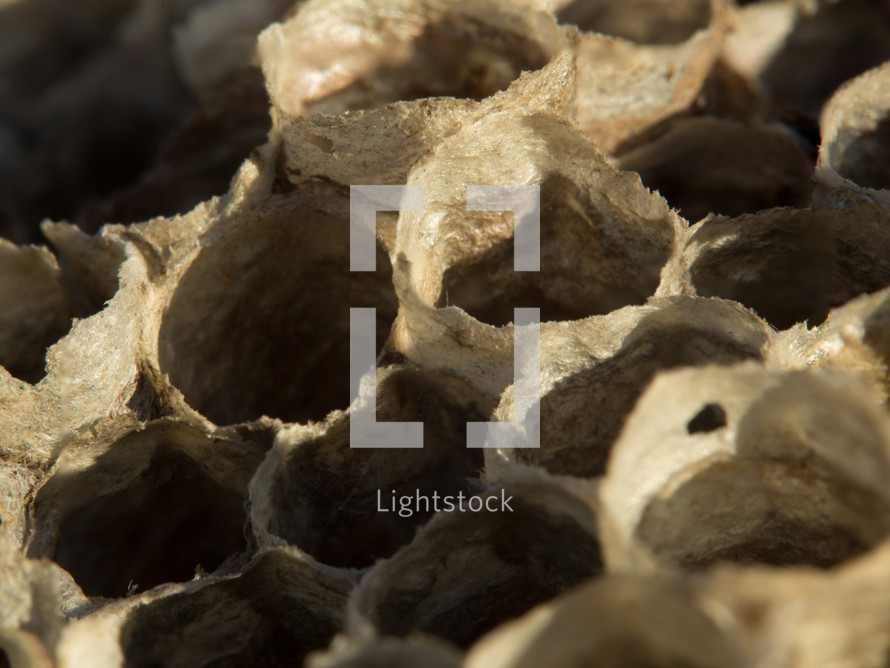An up-close, macro photograph of the detail of a wasp's nest.