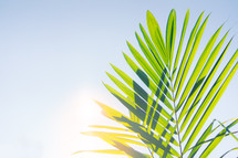 Palm frond in bright sunlight