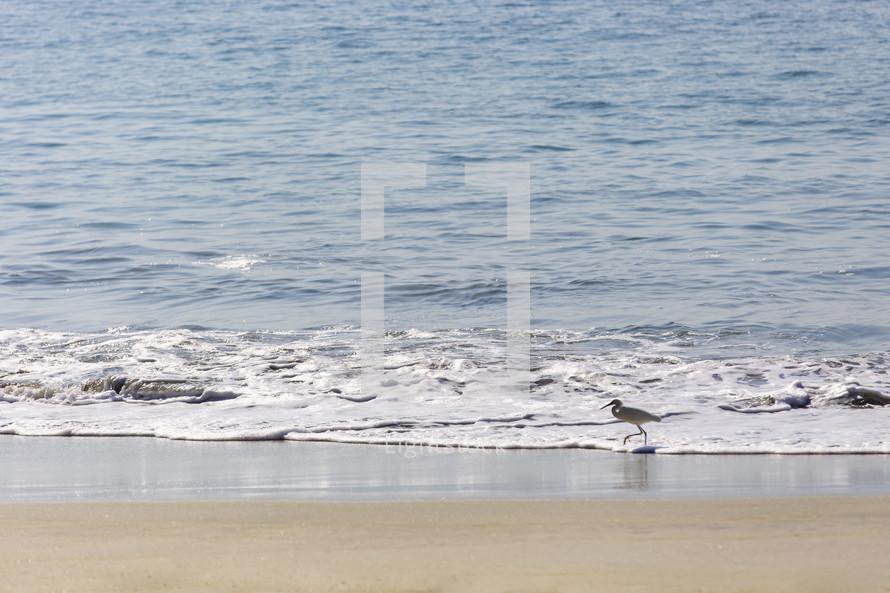 bird walking on a beach