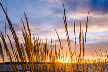 Sunset over water with tall grass growing on the shore.