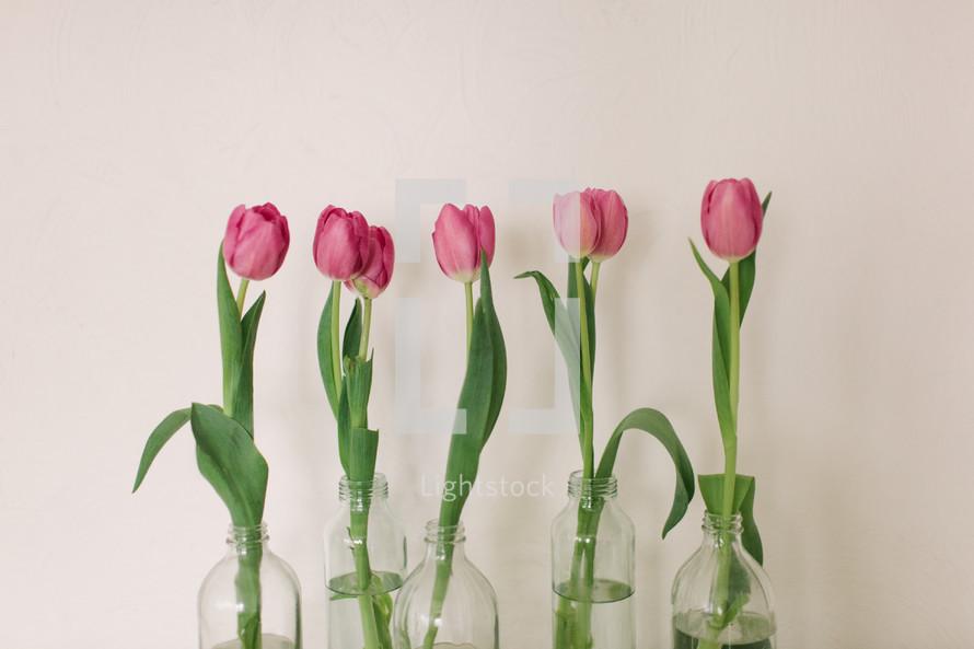 pink tulips in vases
